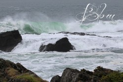 Bontanical Beach1